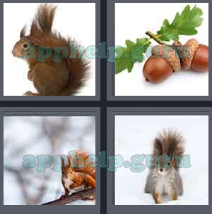4 Pics 1 Word: Level 1301 to 1400: 8 Letters Picture 1369 Answer