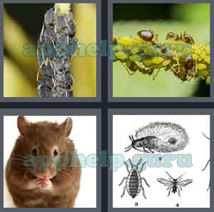 4 pics 1 word all level 1601 to 1700 4 letters answers game help 4 pics 1 word level 1601 to 1700 4 letters picture 1601 answer expocarfo Image collections