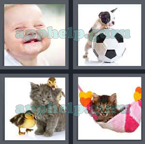 4 Pics 1 Word: Level 1701 to 1800: 4 Letters Picture 1705 Answer