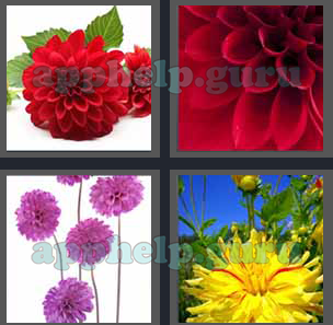 4 pics 1 word all level 2401 to 2500 6 letters answers game help 4 pics 1 word level 2401 to 2500 6 letters picture 2406 answer expocarfo Choice Image