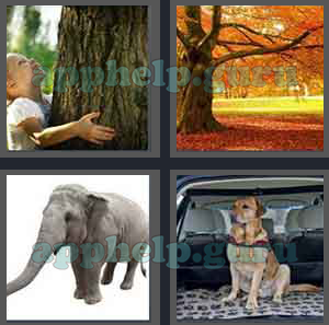 4 Pics 1 Word All Level 2501 To 2600 5 Letters Answers Game Help