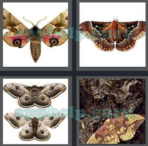 4 Pics 1 Word All Level 3401 To 3500 4 Letters Answers Game Help