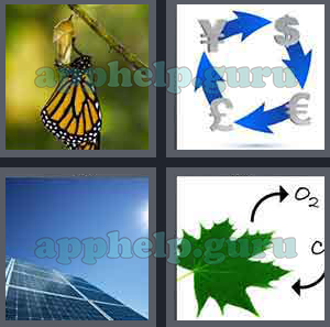 4 pics 1 word 7 letters butterfly 4 pics 1 word 7 letters butterfly how to format cover letter 21535