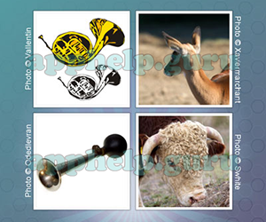 Whats The Word (Redspell): Picture 49 Answer