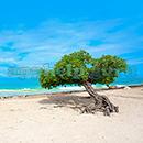 100 Pics Quiz: Desert Island Level 100 Answer