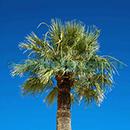 100 Pics Quiz: Desert Island Level 17 Answer