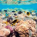 100 Pics Quiz: Desert Island Level 23 Answer