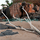 100 Pics Quiz: Desert Island Level 78 Answer