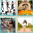 Guess Word - 4 Pics 1 Word (WedSoft and Weizoo): Level 120 Answer