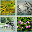Guess Word - 4 Pics 1 Word (WedSoft and Weizoo): Level 20 Answer