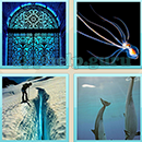 Guess Word - 4 Pics 1 Word (WedSoft and Weizoo): Level 59 Answer