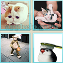 Guess Word - 4 Pics 1 Word (WedSoft and Weizoo): Level 82 Answer