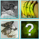 Guess Word - 4 Pics 1 Word (WedSoft and Weizoo): Level 89 Answer