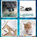 4 Pics 1 Word (Words Mobile): Level 174 Answer