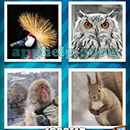 4 Pics 1 Word (Words Mobile): Level 41 Answer
