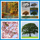 Guess The Word - 4 Pics 1 Word (Loga Games): Level 40 Answer