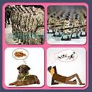 4 Pics 1 Song (Game Circus): Group 63 Level 6 Answer