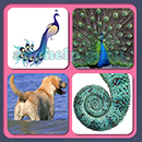 4 Pics 1 Song (Game Circus): Group 73 Level 13 Answer