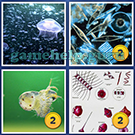 4 Pics 1 Word: More Words: Level 4 Word 7 Answer
