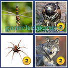 4 Pics 1 Word: More Words: Level 5 Word 13 Answer