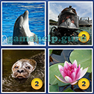 4 Pics 1 Word: More Words: Level 5 Word 15 Answer